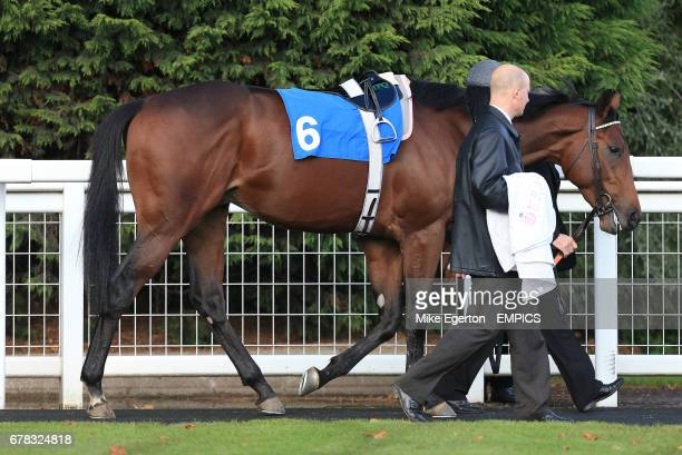 Frankel's halfbrother Morpheus in The British Stallion Studs Supporting British Racing EBF Maiden Stakes