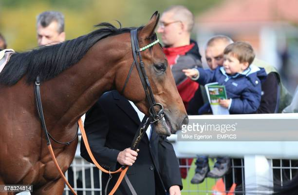 Frankel's halfbrother Morpheus is the centre of attention in The British Stallion Studs Supporting British Racing EBF Maiden Stakes