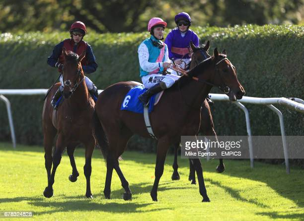 Frankel's halfbrother Morpheus ridden by Tom Queally finishes in seventh place in The British Stallion Studs Supporting British Racing EBF Maiden...
