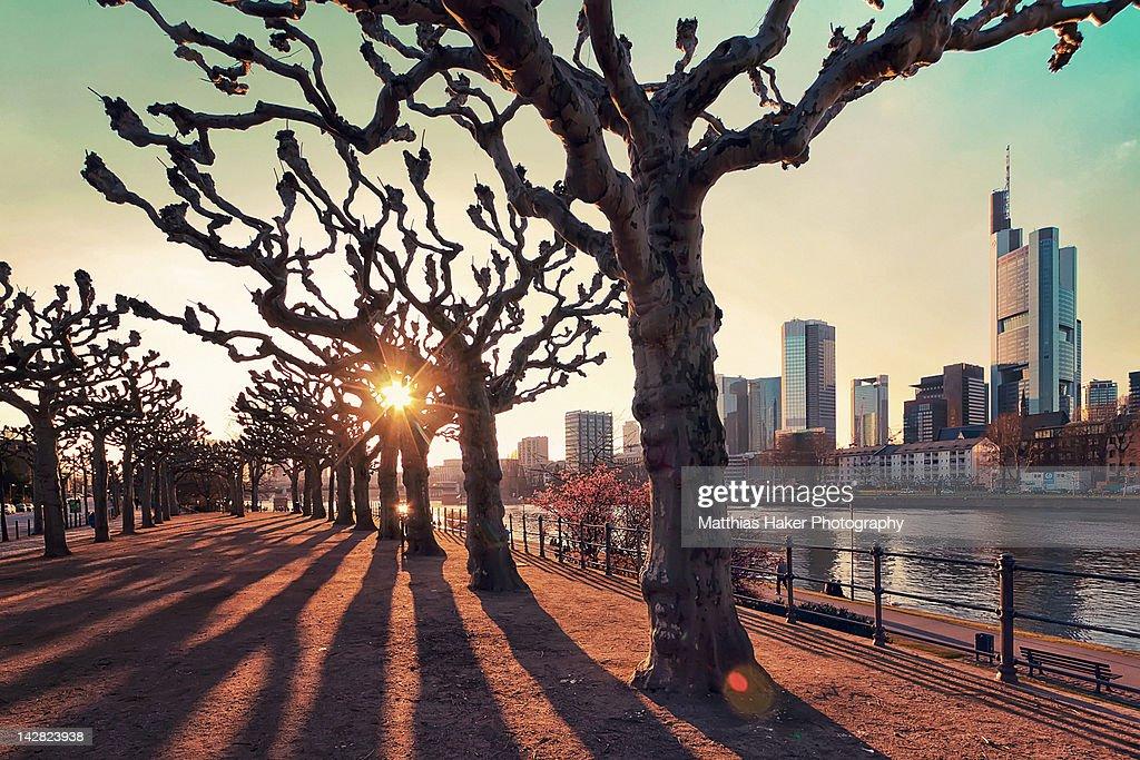 Frankfurt afternoon sun