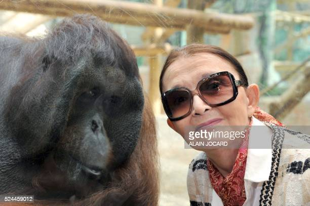 ERIC THOMAS Fran��oise Delord fondatrice du zoo de Beauval pose �� c��t�� d'un orangoutan le 19 juillet 2011 �� SaintAignan Avec 4600 animaux dont...