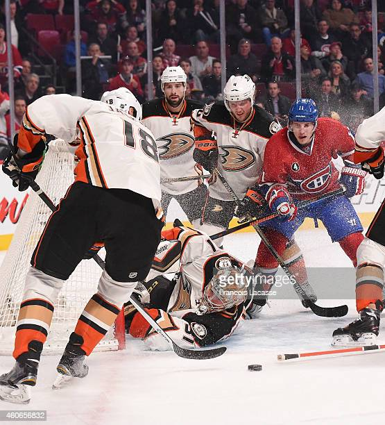 Frederik Andersen of the Anaheim Ducks makes a save against the Montreal Canadiens in the NHL game at the Bell Centre on December 18 2014 in Montreal...