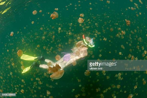 Free diving in Jelly Fish Lake Mastigias papua etpisonii Jellyfish Lake Micronesia Palau