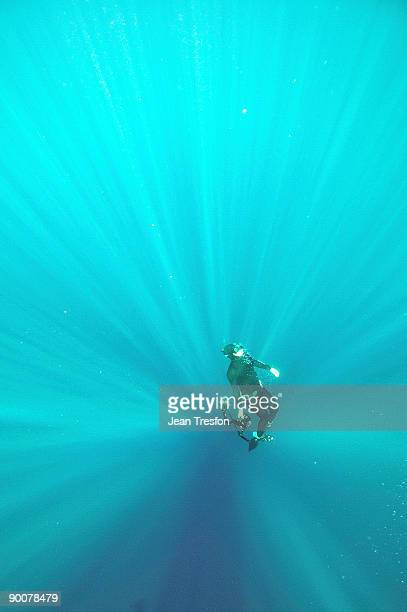 Free diving photographer surfaces