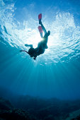 free diving under the sun
