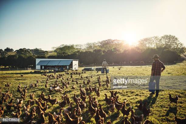 Free range farming is the only way to go