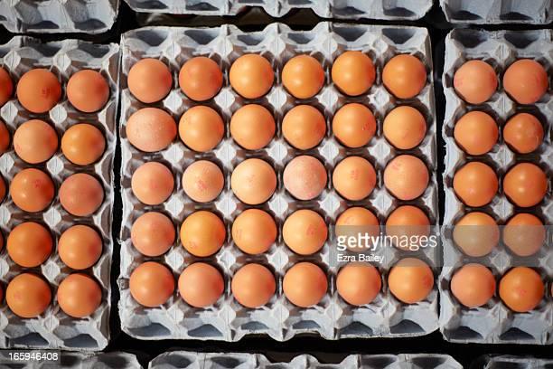 Free-range eggs on a Cornish Farm.