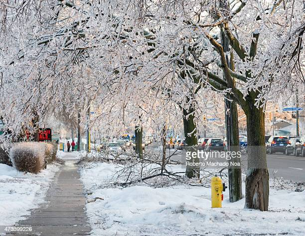 AREAS TORONTO ONTARIO CANADA Freezing rain accumultion during the North American Ice Storm of December 2013 Frozen trees in sidewalk days after the...