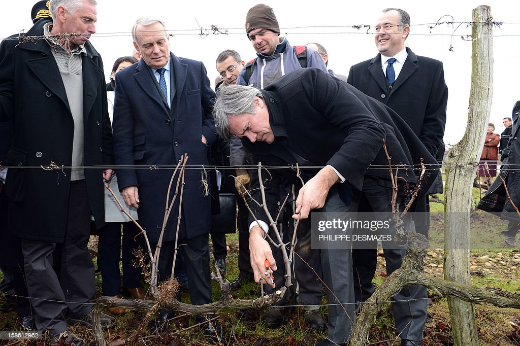 French Agriculture Minister, Stephane Le Foll (C), flanked by Prime Minister Jean-Marc Ayrault, prunes a vine with the help of a farmhand at a vineyard in La Roche-de-Glun near Valence as part of a visit on the theme of agriculture on December 21, 2012.