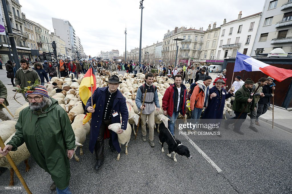 French and German shepherds demonstrate with a flock of ewes, on February 1, 2013, in a street of Valence, southeastern France, to protest against the electronics chip RFID (Radio Frequency Identification) system imposed on their animals. The shephards are protesting over the mandatory tracking of all of their animals with electronic chips after new European Union legislation passed to impose this on all animals born since 2010.