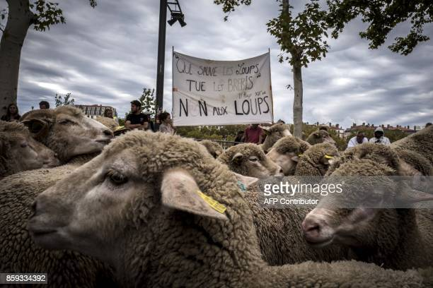 French breeders hold a banner with a quote by French poet Victor Hugo reading 'He who saves the wolf kills the sheep' as they demonstrate with their...