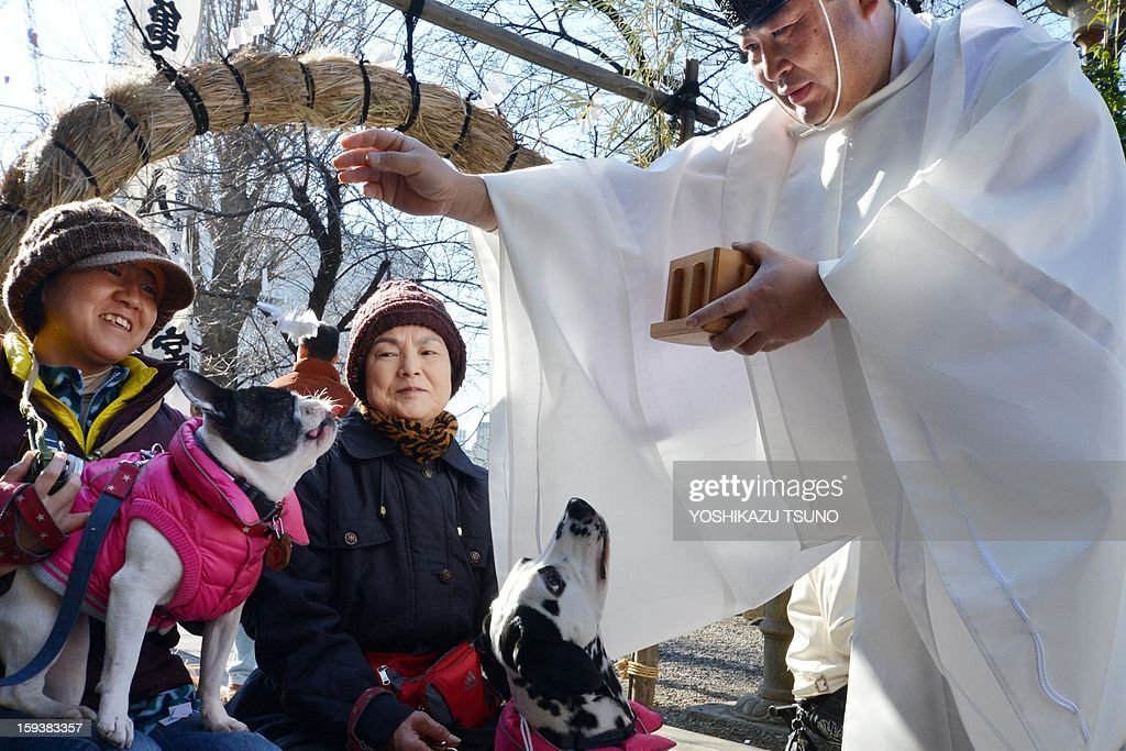A French bulldog (L) and a dalmatian (C), held by their owners, are purified from a Shinto priest (R) at the Ichigaya Kamegaoka-Hachiman shrine in Tokyo on January 13, 2013. Some 500 pet owners visited the shrine to celebrate the New Year and pray for the health and happiness of their animals. AFP PHOTO / Yoshikazu TSUNO