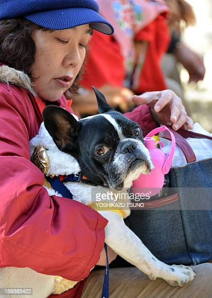 A French bulldog and its owner attend a purification ceremony from Shinto priests at the Ichigaya KamegaokaHachiman shrine in Tokyo on January 13...