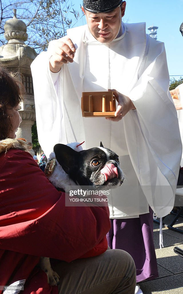 A French bulldog, held by its owner, is purified by a Shinto priest (R) at the Ichigaya Kamegaoka-Hachiman shrine in Tokyo on January 13, 2013. Some 500 pet owners visited the shrine to celebrate the New Year and pray for the health and happiness of their animals. AFP PHOTO / Yoshikazu TSUNO