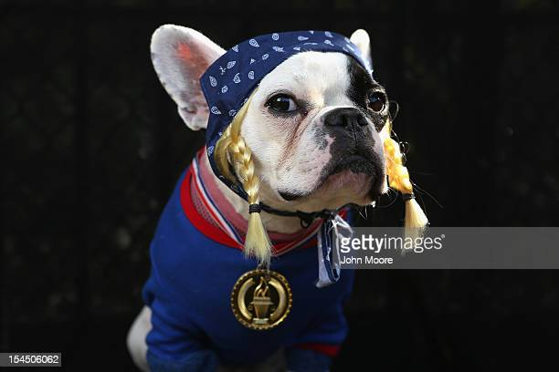 French Bulldog Lula poses as the Olympic Team USA at the Tompkins Square Halloween Dog Parade on October 20 2012 in New York City Hundreds of dog...