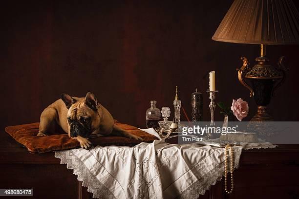 French Bulldog on a cushion on a dressing table.
