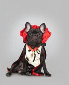 french bulldog vampire