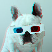 French Bulldog with 3d glasses