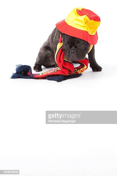 French Bulldog with Spanish scarf and hat
