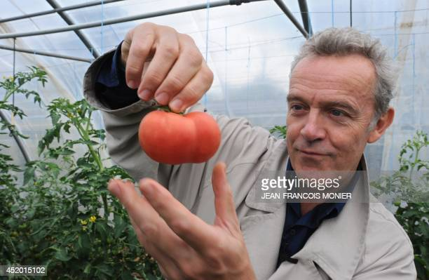 French chef Alain Passard holds a seasonal tomato he picked in his vegetable garden in FillesurSarthe western France on July 9 2014 Since 2002...