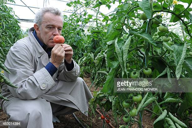 French chef Alain Passard smells a seasonal tomato he picked in his vegetable garden in FillesurSarthe western France on July 9 2014 Since 2002...