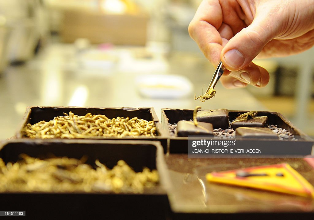 French chocolate maker Sylvain Musquar places insects on top of his chocolates on October 12, 2013 in his chocolaterie in Villers-les-Nancy, north-eastern France. Musquar had the idea to offer mealworms or crickets on his chocolates after he worked in Japan and South Corea.