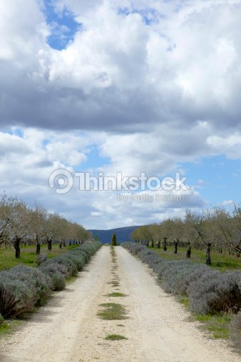 French country driveway : Stock Photo
