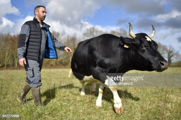 Cow Pie Stock Photos and Pictures | Getty Images