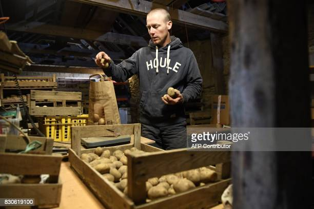 French farmer David Cuisnier put potatoes in a bag on August 9 2017 in the island of Quemenes in Le Conquet western France A family rehabilated a...