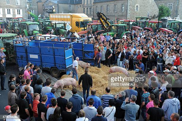French farmers and breeders with tractors and pigs protest outside the prefecture of SaintBrieuc western of France against the low price purchase of...