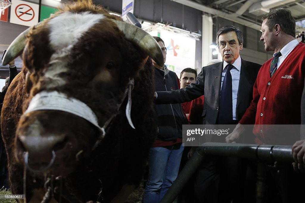 French former Prime Minister François Fillon (2ndR) pets a cow as he visits the Paris' International Agriculture Fair at the Porte de Versailles exhibition center, on February 28, 2013. Some 1,300 exhibitors and 4,000 animals attend the fair which runs from from February 23 to March 3, 2013.