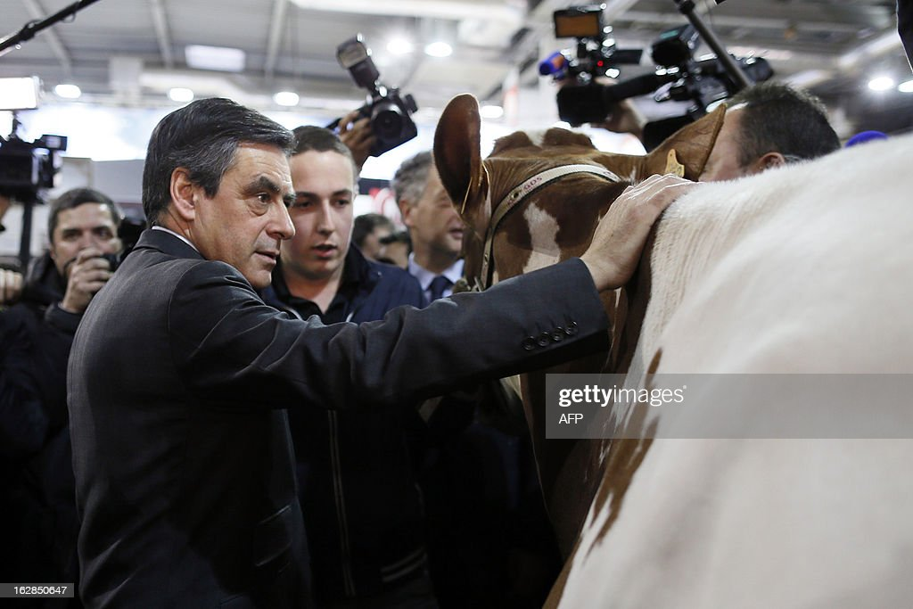 French former Prime Minister François Fillon (L) pets a cow as he visits the Paris' International Agriculture Fair at the Porte de Versailles exhibition center, on February 28, 2013. Some 1,300 exhibitors and 4,000 animals attend the fair which runs from from February 23 to March 3, 2013.