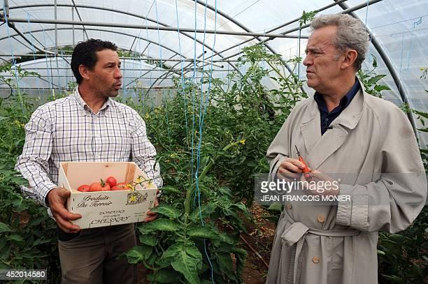 French gardener Sylvain Picard and French chef Alain Passard pick seasonal tomatoes in Passard's vegetable garden in FillesurSarthe western France on...