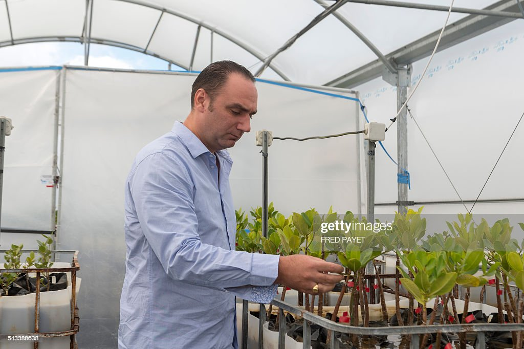 French geochemist at the IRD (Institut de Recherche pour le Developpement), Cyril Marchand, poses on June 28, 2016 in Mont-Dore, near Noumea, next to mangrove plants installed in a greenhouse which recreates the weather conditions similar to what is forecast for the end of the century, to study greenhouse gas. / AFP / Fred Payet