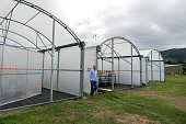 French geochemist at the IRD Cyril Marchand poses on June 28 2016 in MontDore near Noumea next to mangrove plants installed in greenhouses which...