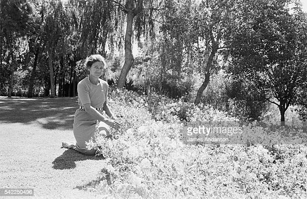French Health Minister Simone Veil relaxes in her garden during the summer vacation Veil served as Health Minister in Jacques Chirac's government...