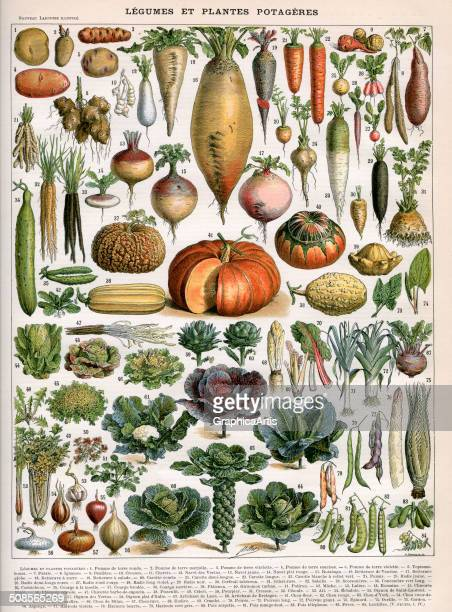 French illustration of vegetable varieties ca 19051910