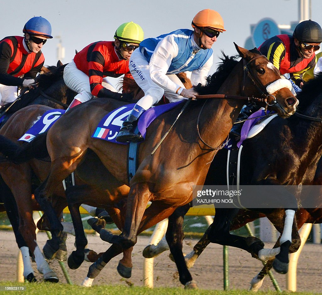 French jockey Olivier Peslier (2nd R, #14) rides on Slemia, the winner of the Prix de l'Arc de Triomphe, during the 2,400-metre (1.5 mile) Japan Cup horse race at the Tokyo Race Course on November 25, 2012. Gentildonna edged past Prix de l'Arc de Triomphe runner-up Orfevre by a nose to become the first three-year-old filly to win the Japan Cup horse racing.