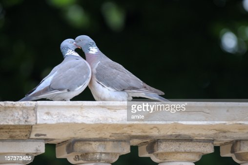 french kiss : Stock Photo