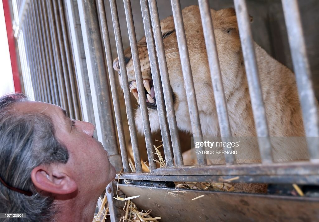 French lion tamer Frederik Rosel poses near his lions on April 17, 2013 in his garden in Sainte-Livrade-sur-Lot, southwestern France. Rosel awaits to sign a contract with a circus.