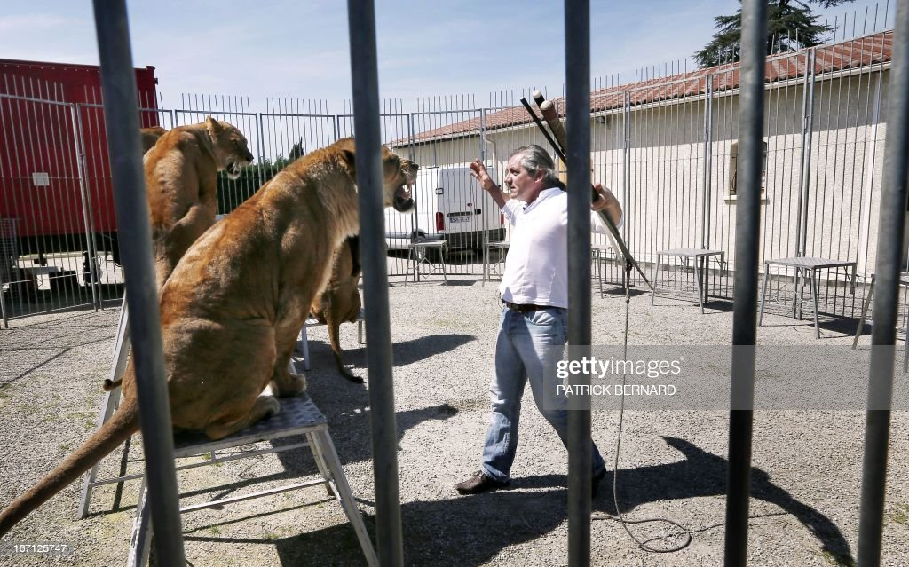 French lion tamer Frederik Rosel stands near his lions on April 17, 2013 in his garden in Sainte Livrade, southwestern France. Rosel awaits to sign a contract with a circus.