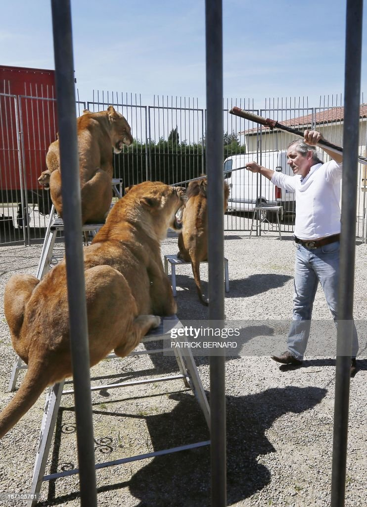 French lion tamer Frederik Rosel stands near his lions on April 17, 2013 in his garden in Sainte Livrade, southwestern France. Rosel awaits to sign a contract with a circus. AFP PHOTO / PATRICK BERNARD