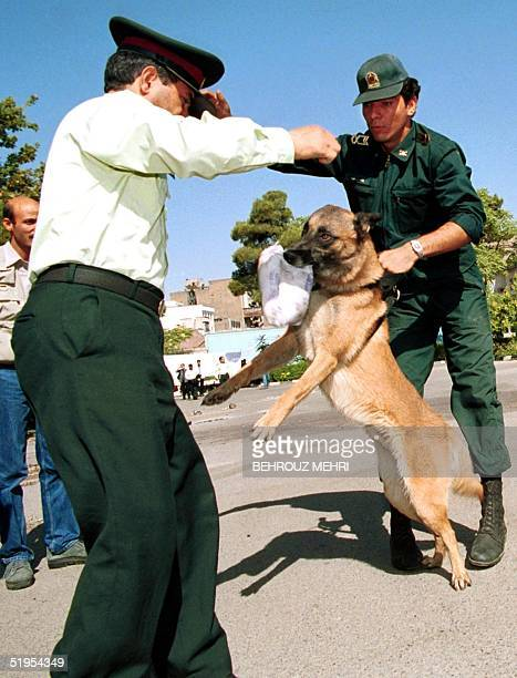 French Malinois dog finds a pocket of morphine which was hidden by Iranian police during a special demonstration for journalists at the antidrug...