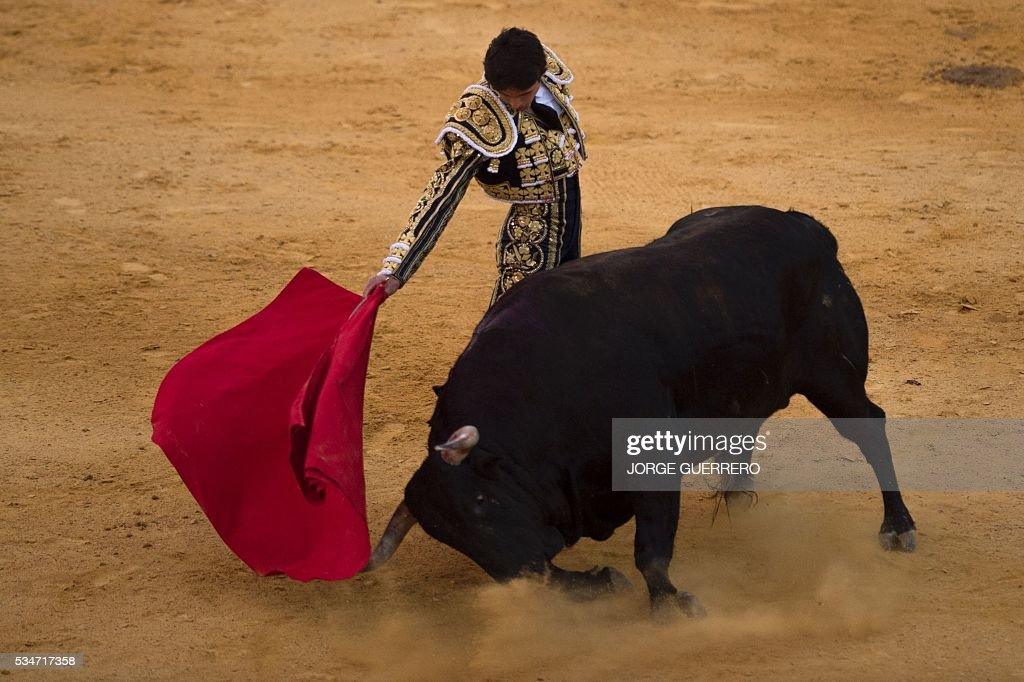 French matador Sebastian Castella performs a pass on a bull during the Corpus bullfight festival at a Granada bullring on May 27, 2016. / AFP / JORGE