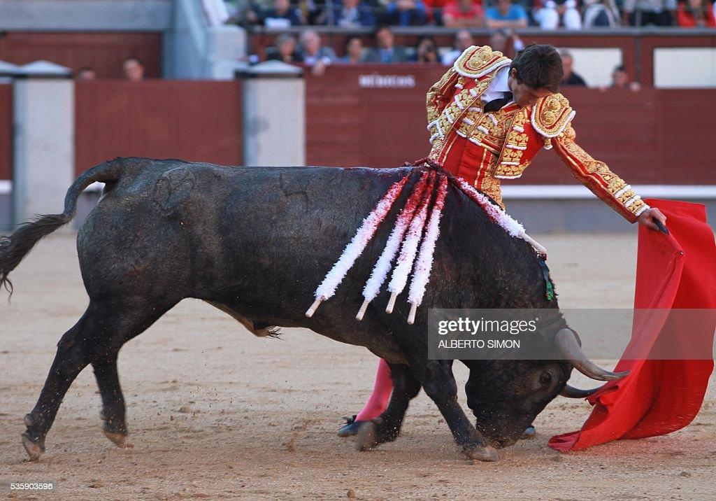 French matador Sebastian Castella performs a pass on a bull during the San Isidro bullfight festival at Las Ventas bullring in Madrid on May 30, 2016. / AFP / ALBERTO