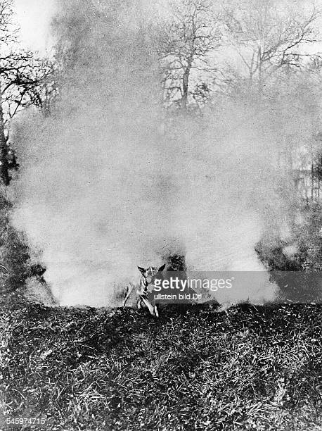 French messender dog with gas mask that is used for warfare is making his way through a cloud of poison gas spring 1917