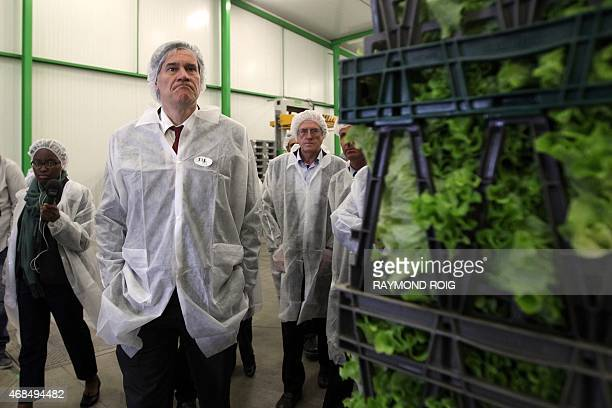 French Minister of Agriculture Stephane Le Foll visits the market garden cooperative Terraneo in SaintHippolyte on Avril 3 2015 AFP PHOTO / RAYMOND...