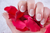 Modern french nails polish style on woman hand. Girl holding red rose petals in studio. Manicure and Beauty concept. Close up, selective focus