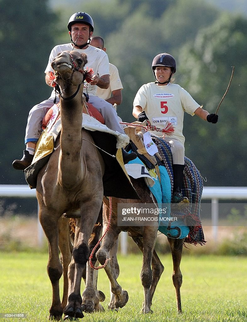 French Olivier Philipponneau and French Clotilde Wibaux ride camels during a French Cup of camel races on August 10, 2014 on the horserace track of La Chartre-sur-le-Loir, western France. Unusual in these latitudes, eight dromaderies that have never seen the desert, took part in two races of 1000 meters.