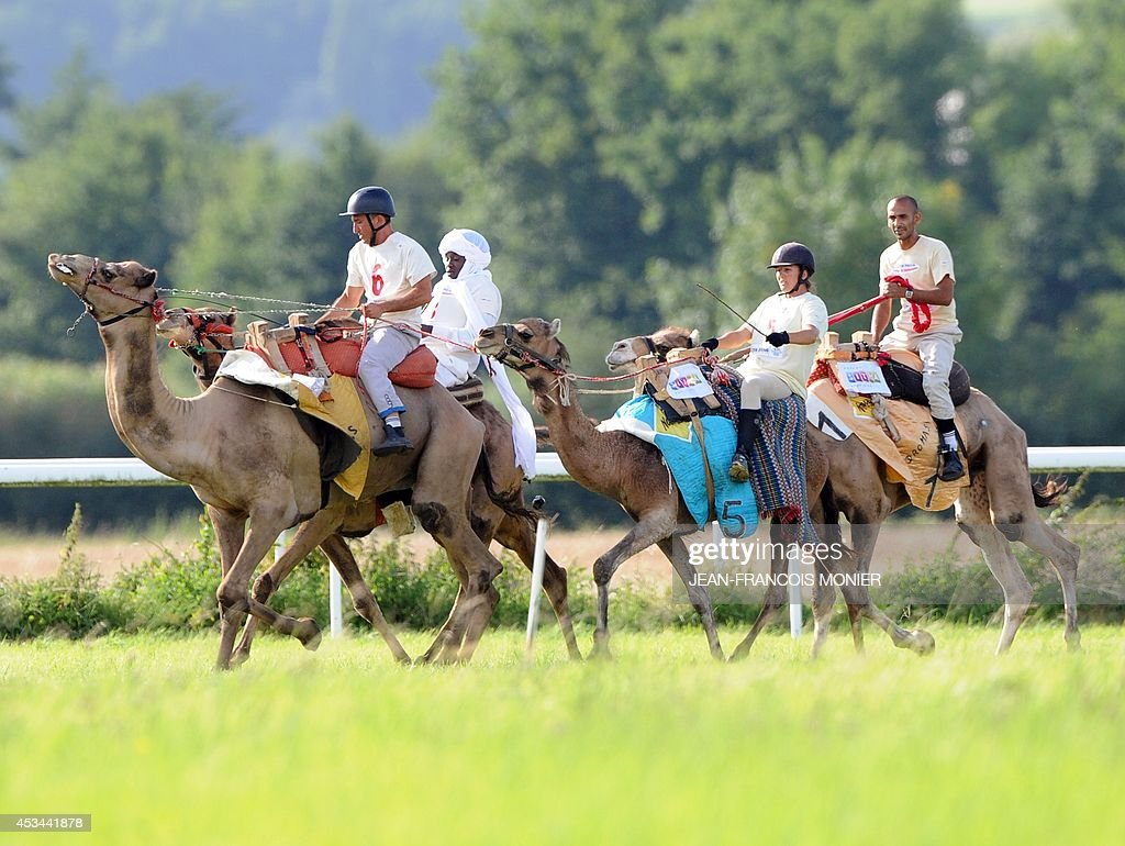 French Olivier Philipponneau, Chadian Hissein Wiledah, French Clotilde Wibaux and Franco-Moroccan Glif Nanir ride camels during a French Cup of camel races on August 10, 2014 on the horserace track of La Chartre-sur-le-Loir, western France. Unusual in these latitudes, eight dromaderies that have never seen the desert, took part in two races of 1000 meters.